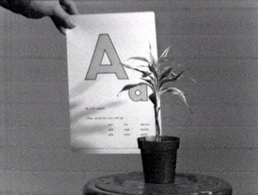 John Baldessari, still from <em>Teaching A Plant the Alphabet</em>, 1972. Black and white video, 19 min. Courtesy of John Baldessari.